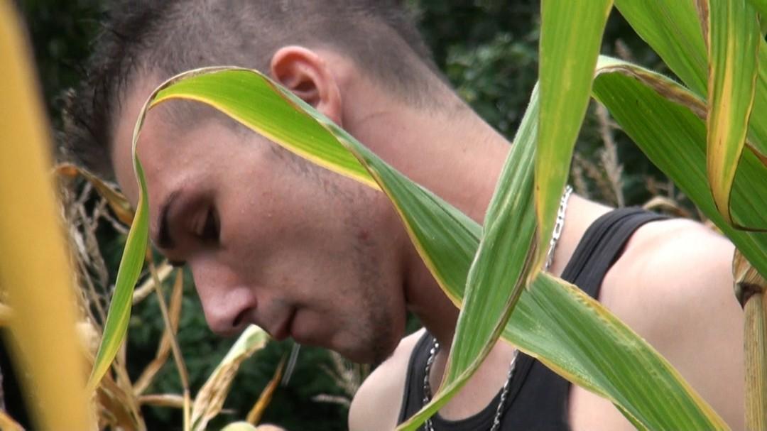 un mec se tape un agriculteur d'un champ de mais