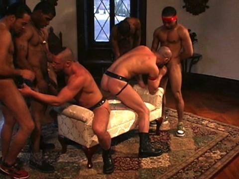 pitbull the show universblack partouze gay pic02