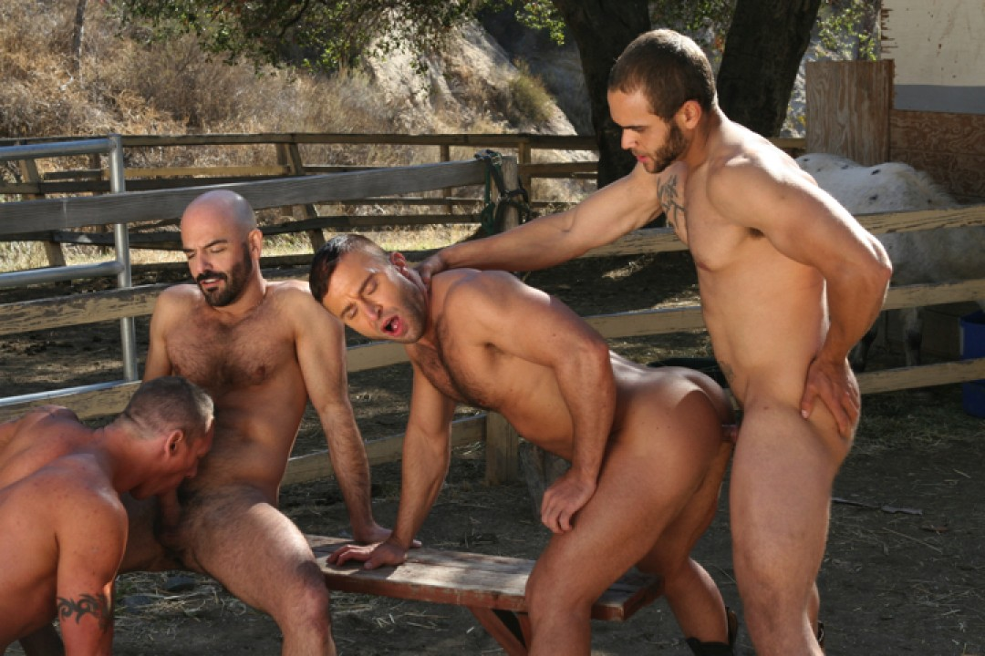 Cocks out at the ranch