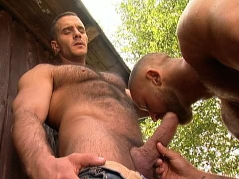 bear gay 4