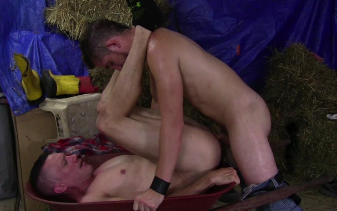 Cock training on the farm