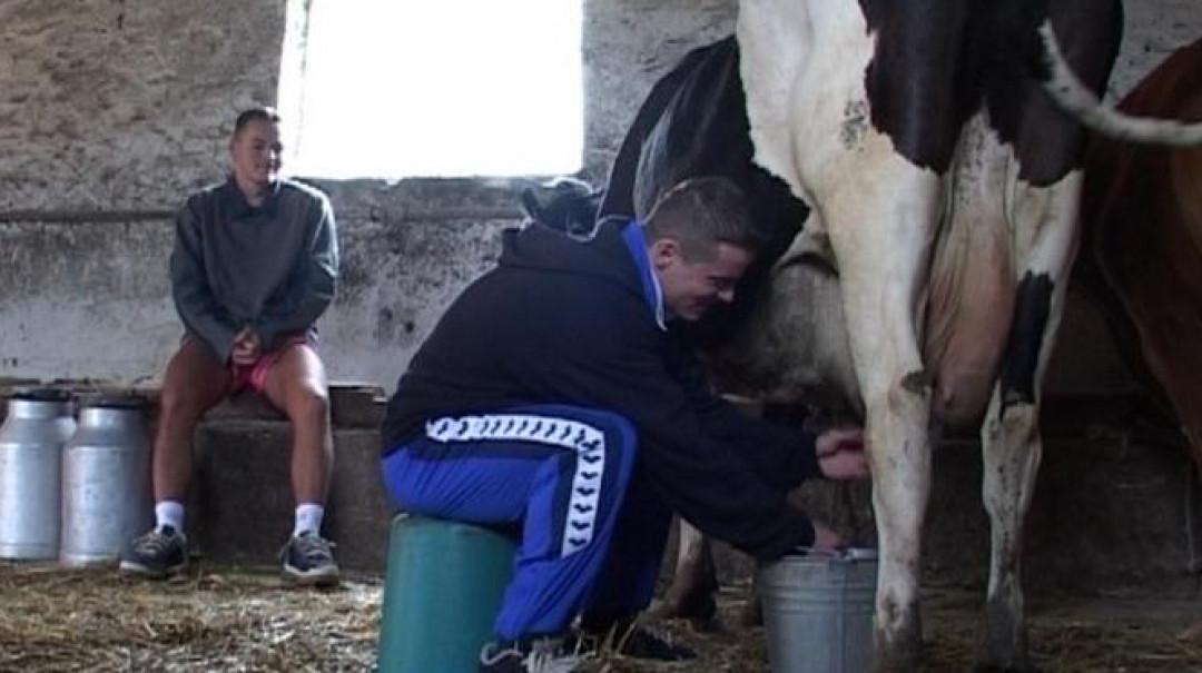 Extraction du lait
