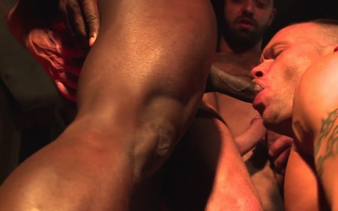 L16320 MISTERMALE gay sex porn hardcore fuck videos hunks hairy scruff muscle studs butch 11