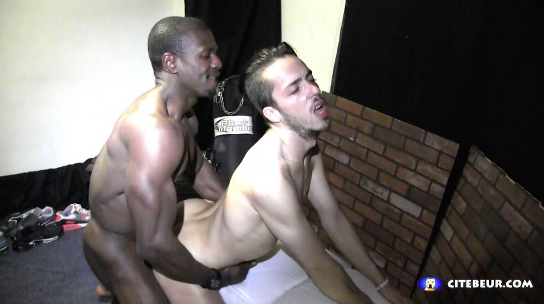Le puma noir et sa biche