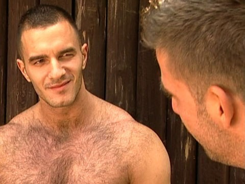 bear gay 5