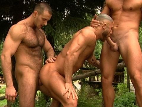 bear gay 7