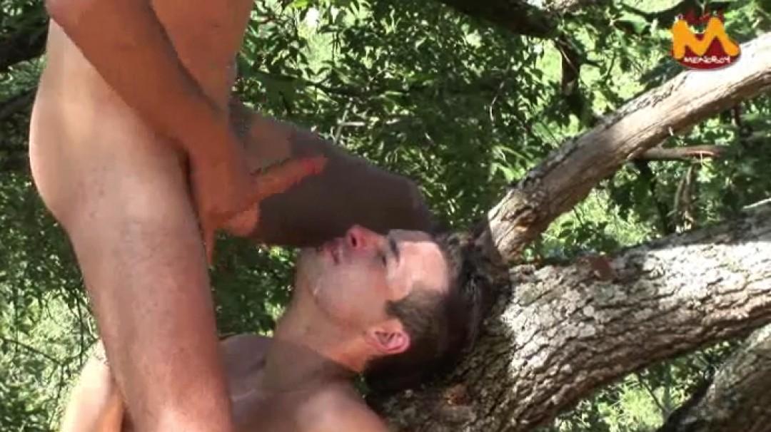 Perchés sur un arbre