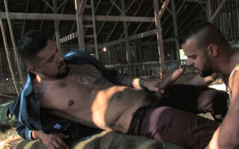 l12865-mistermale-gay-sex-porn-hardcore-videos-butch-hunks-muscles-studs-beefcakes-males-scruff-hairy-tatoo-007