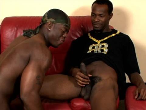 blacks-pitbull-1