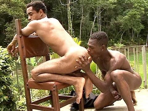 duo pitbull universblack gay-9
