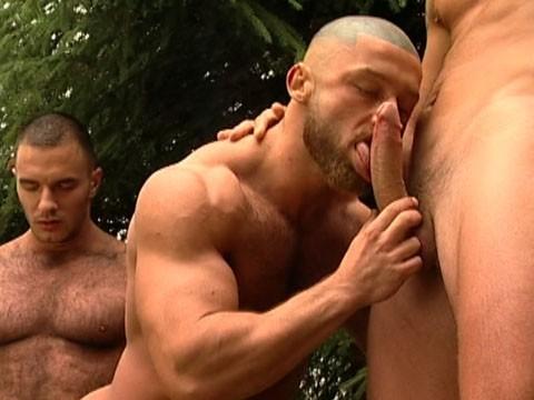 bear gay 6