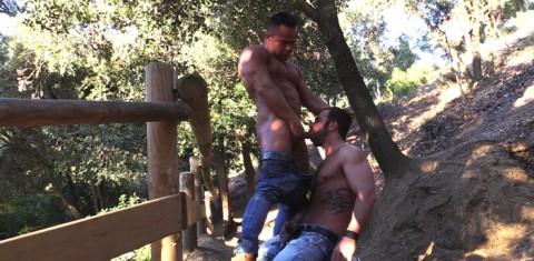 Obéissance dans les bois