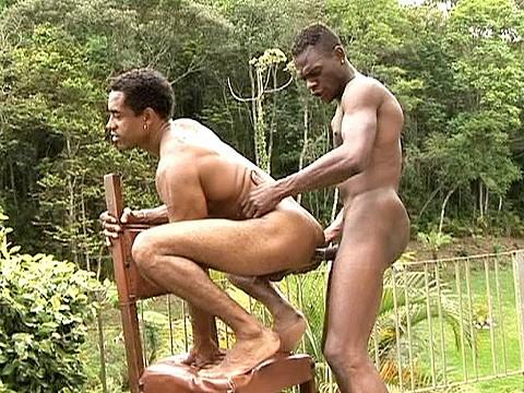 duo pitbull universblack gay-11