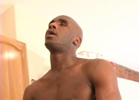 L1511 UNIVERSBLACK gay sex black pitbull 09