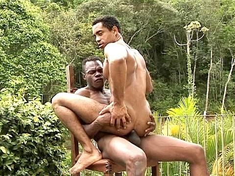 duo pitbull universblack gay-12