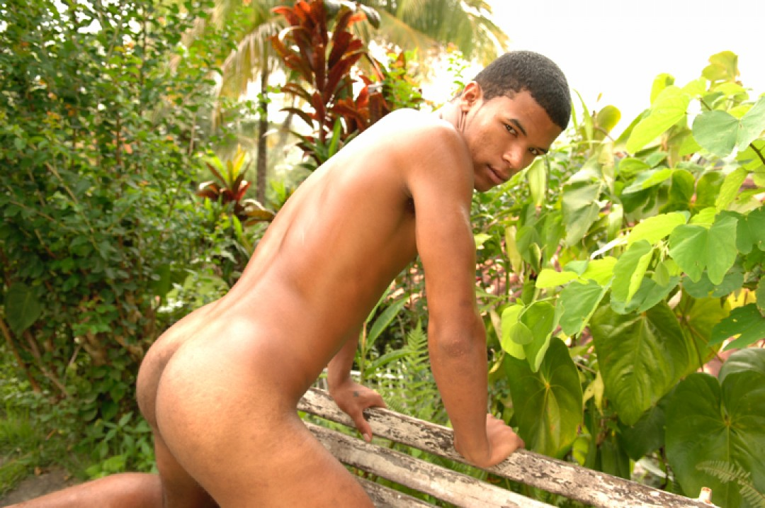 Cocks in latino paradise