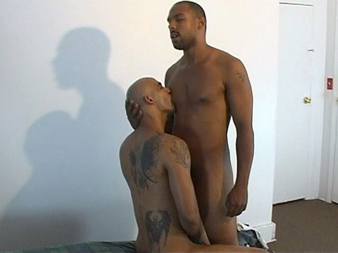 duo pitbull universblack  give a thug a bone-3