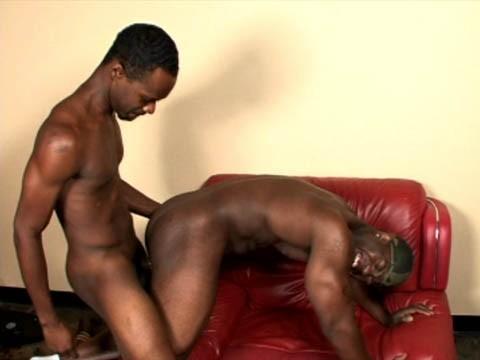blacks-pitbull-6